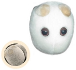 Giant Microbes Yeast
