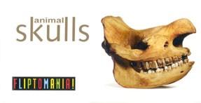 Animal Skulls Flipbook